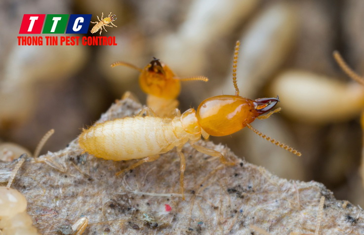termite-pest-control-seattle-pest-removal-company